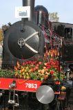 bloemen_trein